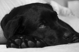 Enfermedades del sistema digestivo del perro