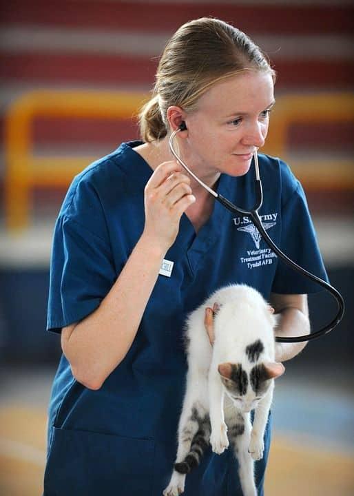 estudiar para ser veterinario