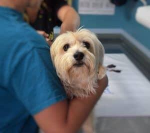 el veterinario nos recomienda condroprotectores