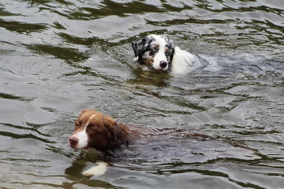 salud articular perros