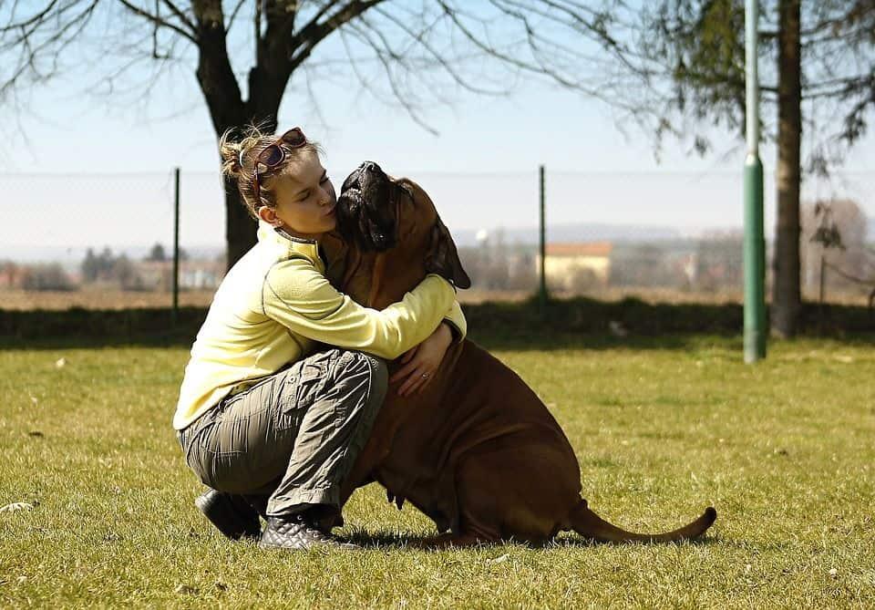 placas para evitar que nuestros perros se pierdan
