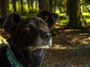 perro con collar localizador con gps
