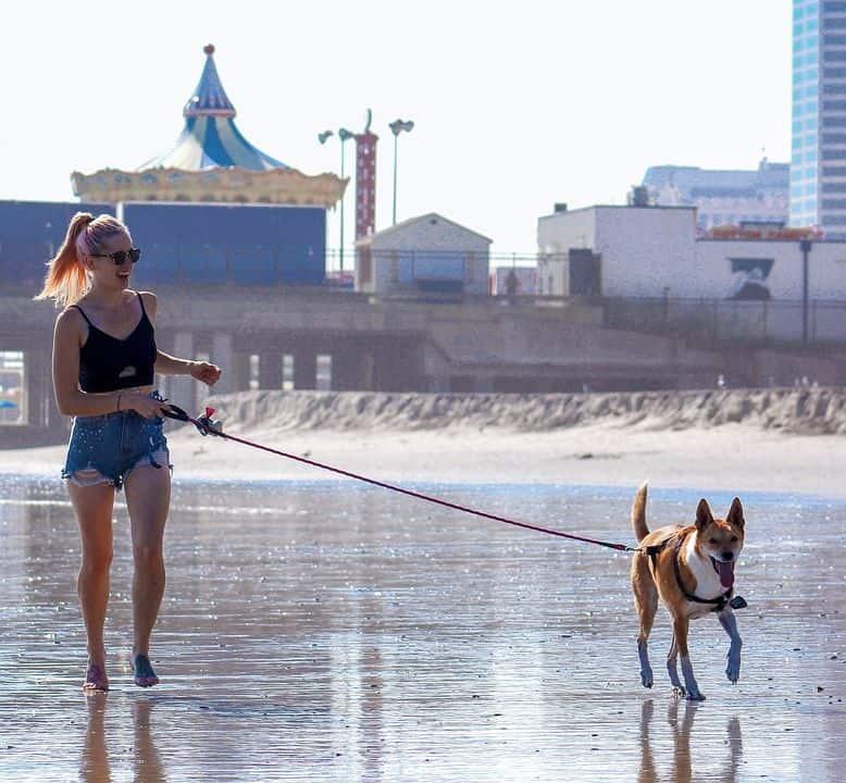 Usando la tecnología para no perder a nuestros perros