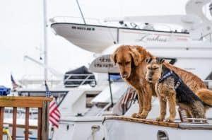 viajar con nuestro perro en un barco