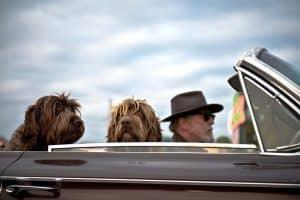 como viajar con un perro en el coche
