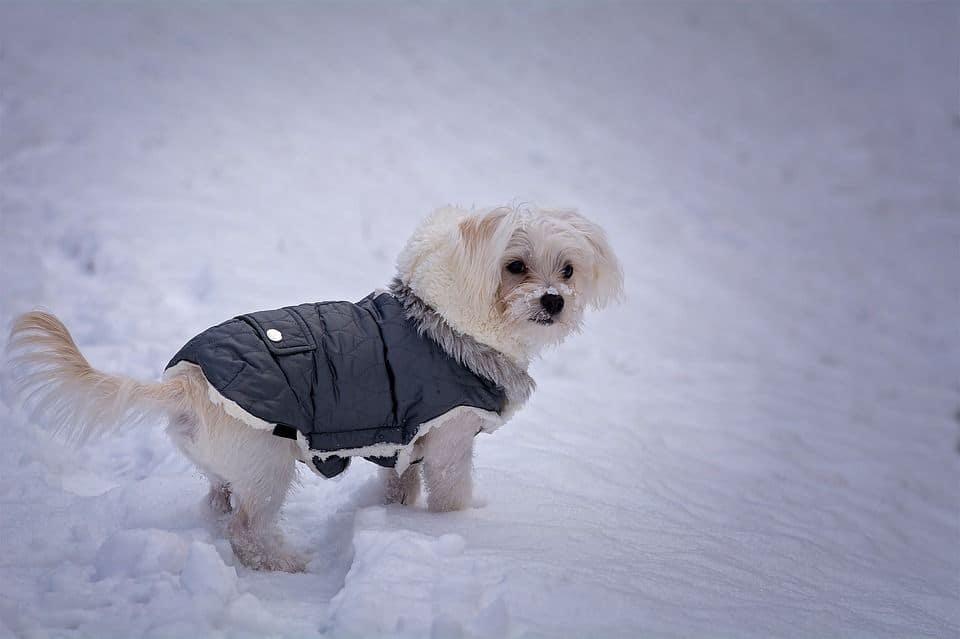 Ropa para perros en invierno
