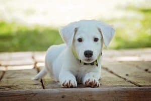 lista de nombres para perro macho