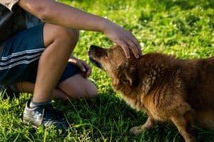 Encuentra el mejor nombre para tu perro
