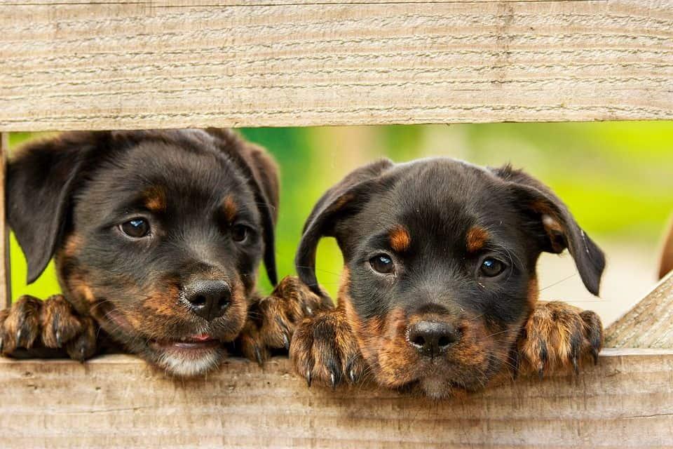 desparasitar internamente cachorros