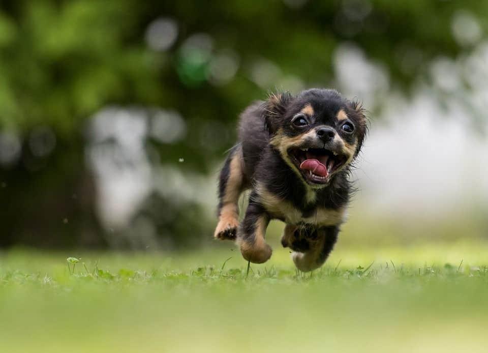 perros enferman por parásitos internos