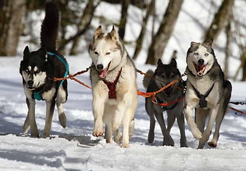 condroprotectores para evitar lesiones en perros