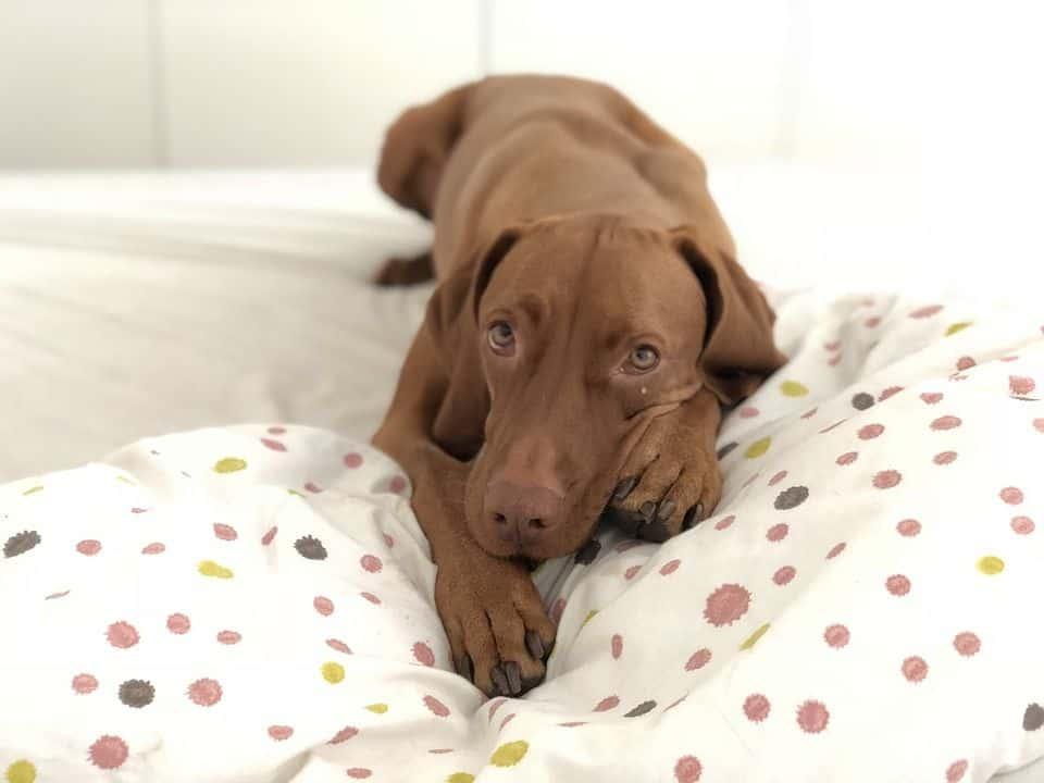 las mejores camas para perro