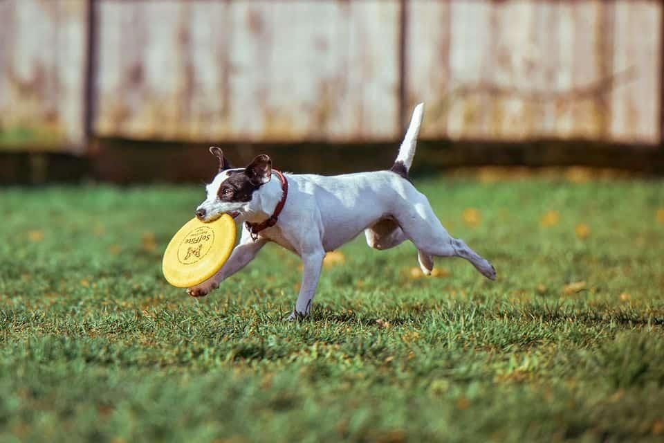 perro feliz haciendo deporte