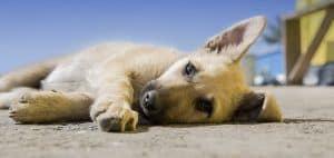 Dejar a tu perro en una residencia canina