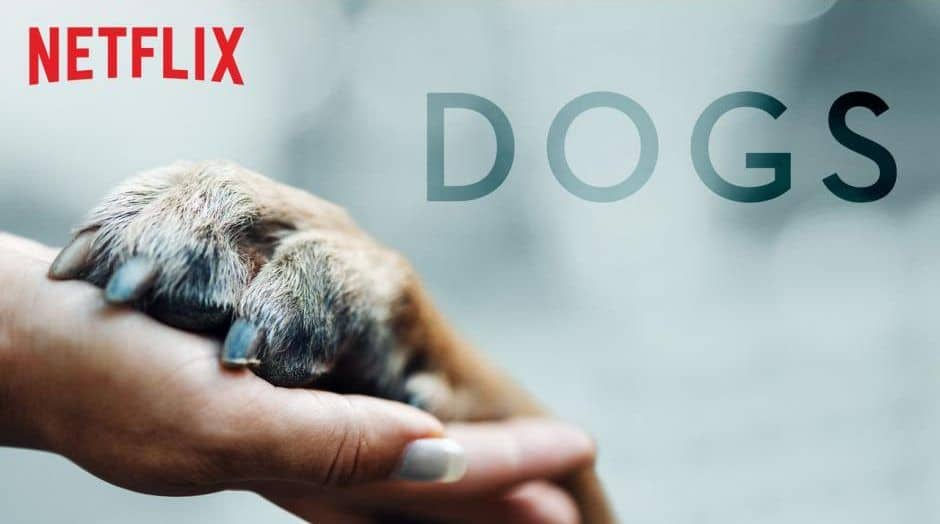 Amigos Caninos Netflix