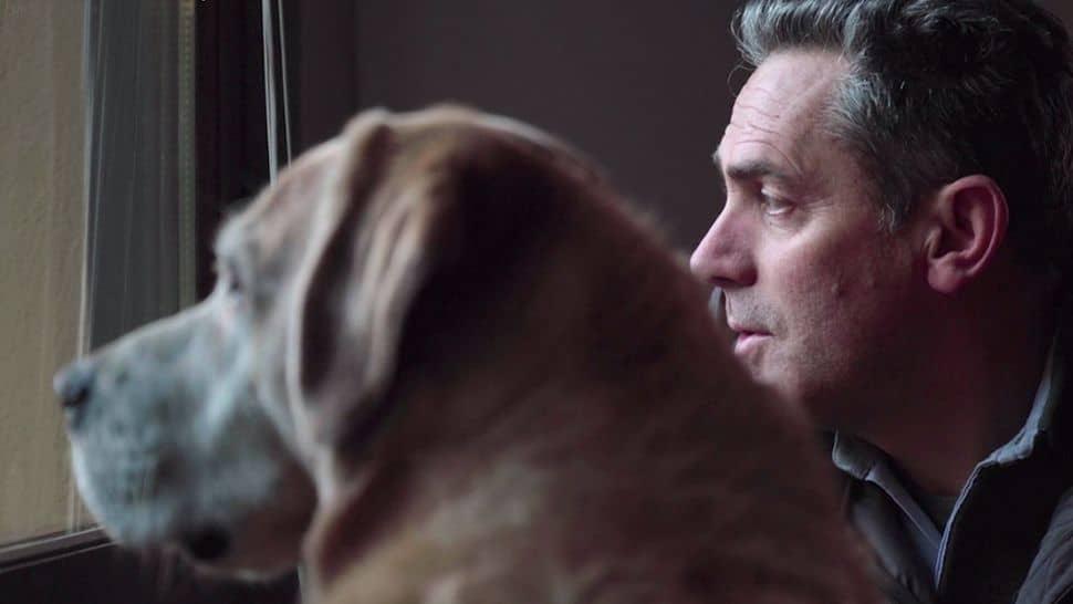 Amigos caninos 1