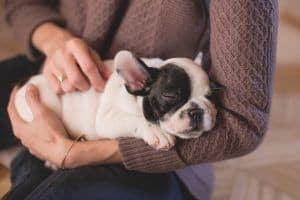 por que roncan los perros