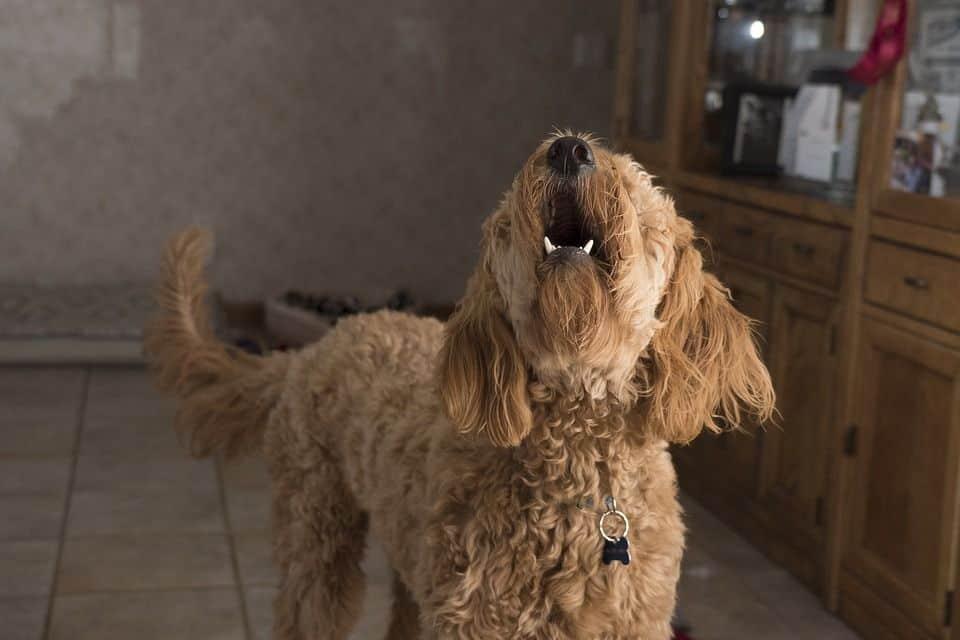 collar antiladrido perro