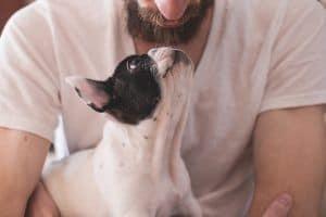 pìenso para perros