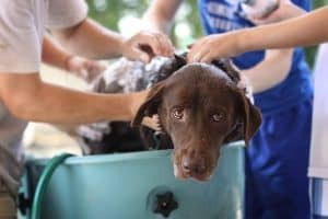 dog groomer bath