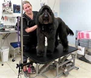 cortapelos profesionales para perros