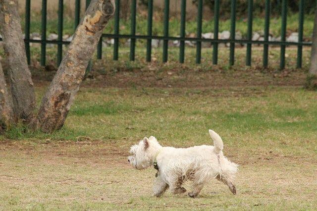 valla parque canino seguridad