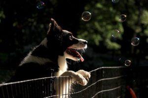 cerramiento parque canino sevilla