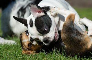 parque canino perros pueden jugar
