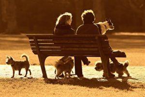 banco parque para perros madrid