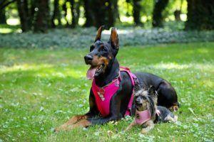 parque canino sevilla