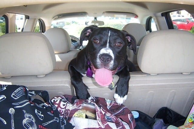 viajar con perro en coche tips