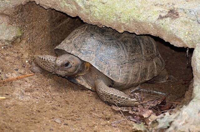 tortuga necesita sombra
