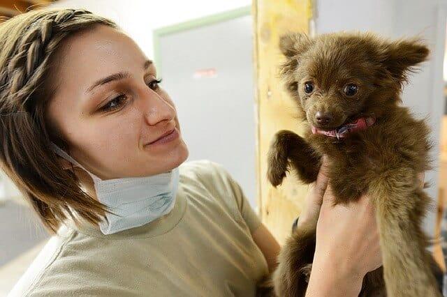 diureticos para perros