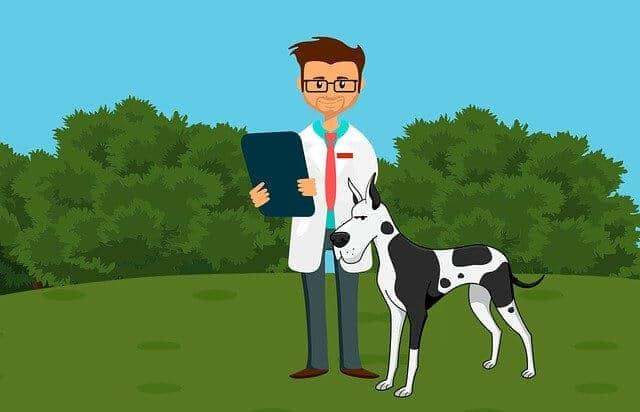 uso de furosemida en nuestros perros