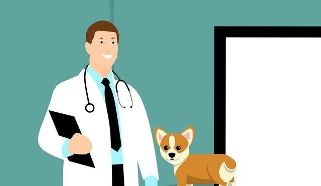 veterinario como elegirlo