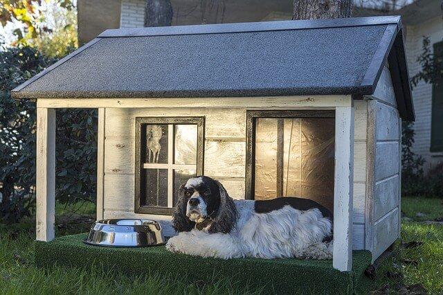 caseta perro en casa