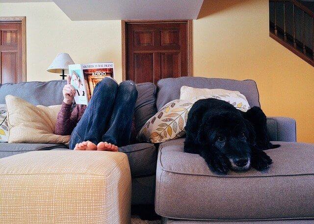 como tener un perro en casa