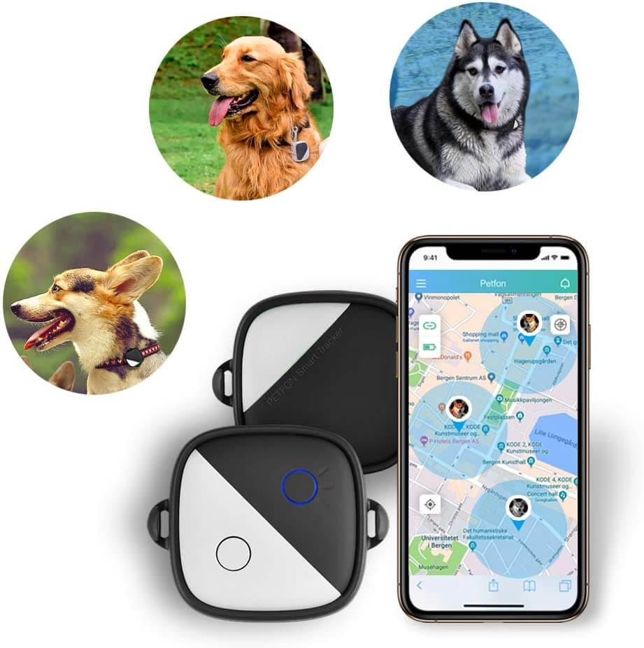 ¿Quieres saber dónde está tu perro las 24 horas? El GPS para perros es la solución 2
