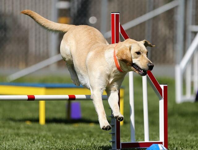 agility salto