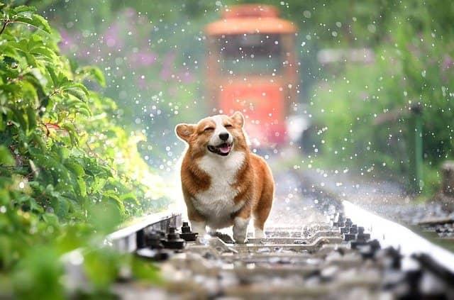 perro ejercicio