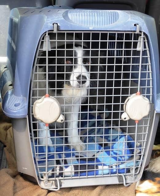 usar jaula perro
